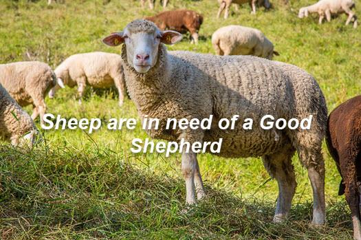 Sheep need a shepherd
